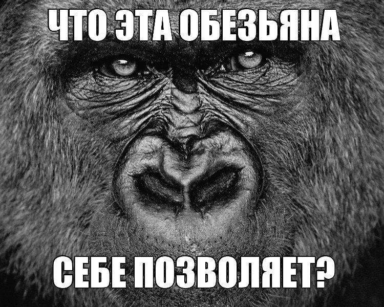 Ctrc c секс с шимпанзе