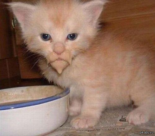 Наипездатейший кот