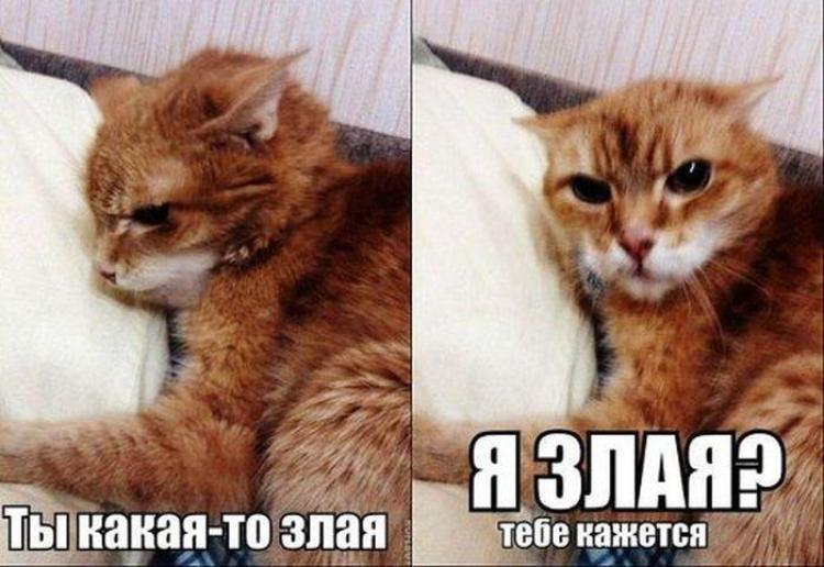 https://cs4.pikabu.ru/images/big_size_comm/2014-11_6/14172844675769.jpg