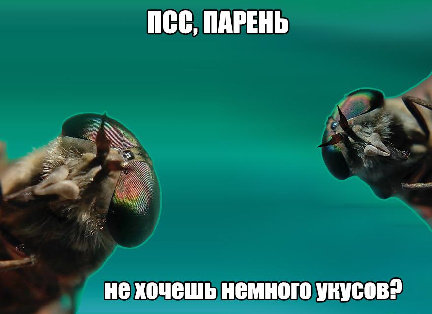 solominkoy-v-popu