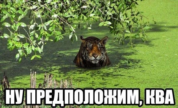 https://cs4.pikabu.ru/images/big_size_comm/2015-04_1/14280664903599.jpg