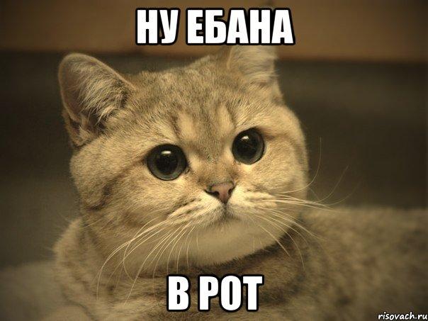 Сиськи насувал русской в рот