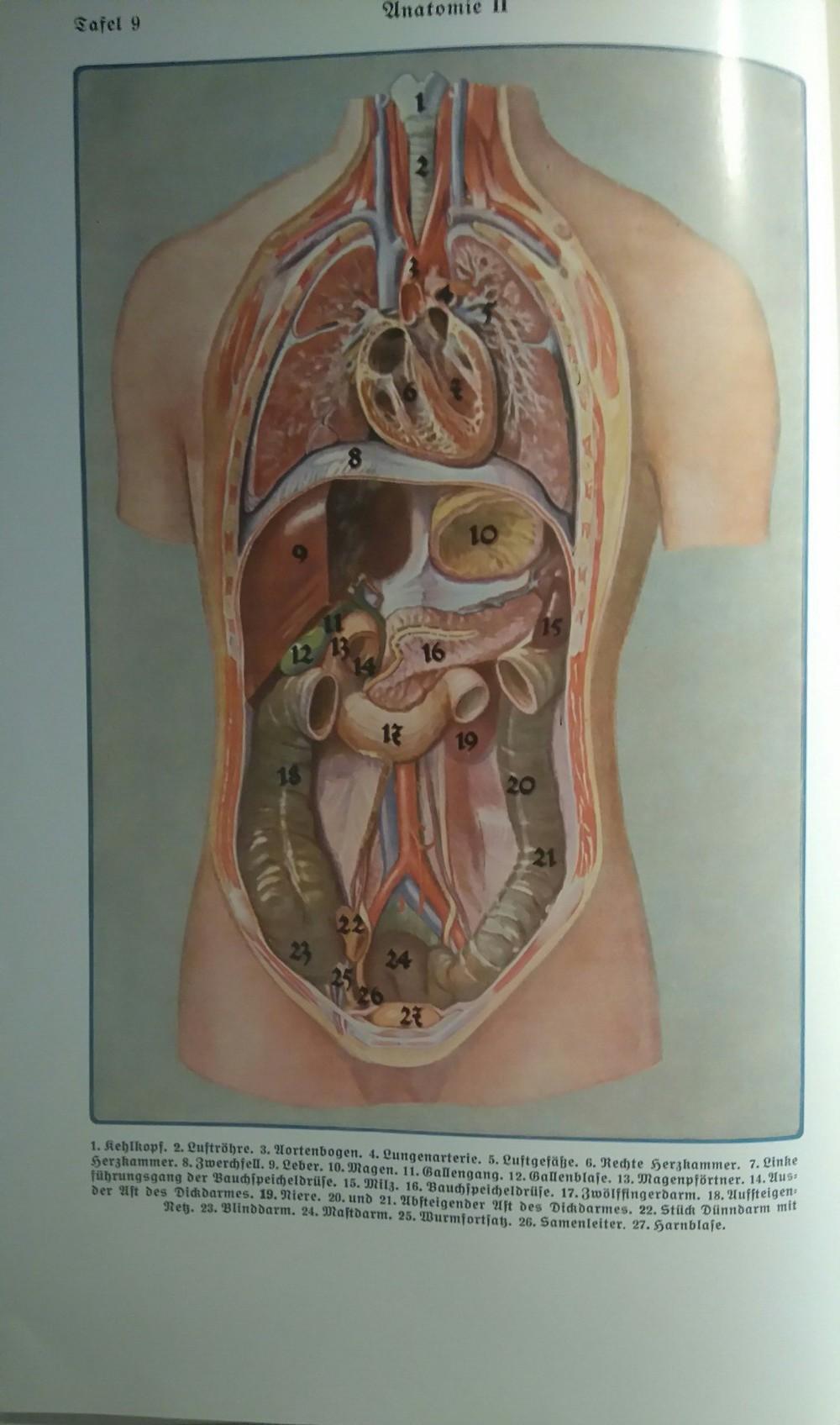 Großartig Leber Gallen System Anatomie Und Physiologie ...