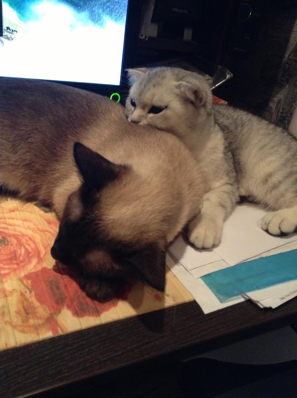 Кошачье Знакомство