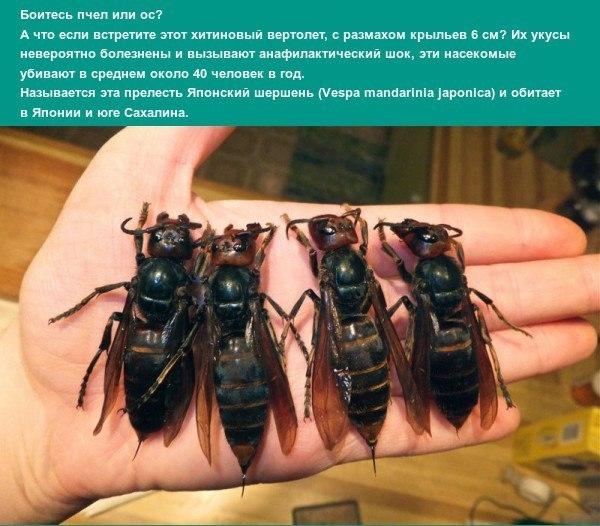 Если пчелу посадить на хуй — photo 5