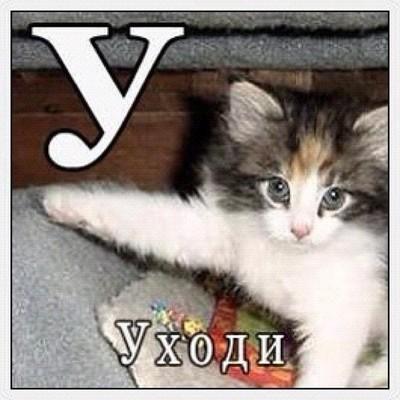 https://cs4.pikabu.ru/images/previews_comm/2014-09_5/14114345892422.jpg