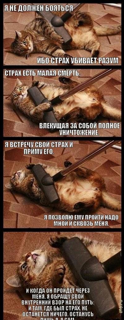 Кот страх пылесос