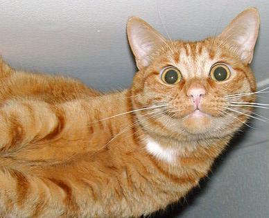 улыбается кот картинка