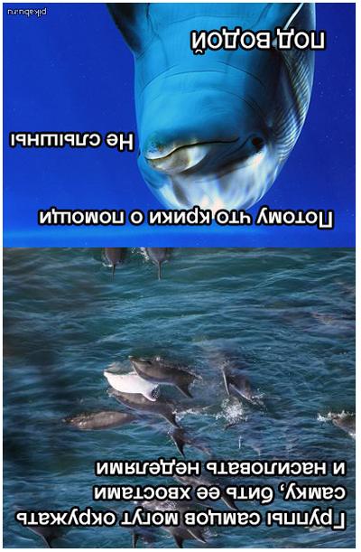 Жельфины ебут девушку