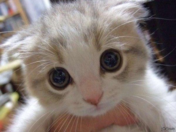 home remedy cat repellent