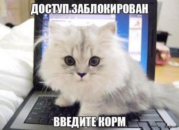 Да пребудут котики на пикабу!