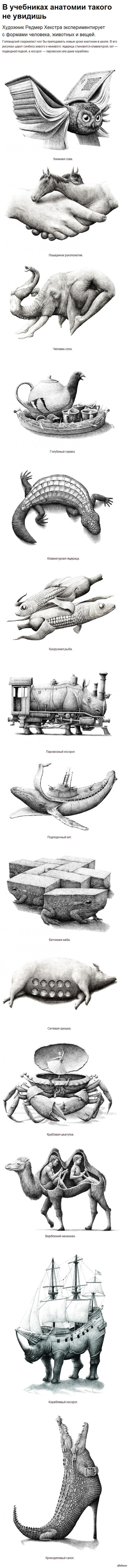 Странная анатомия (в комментариях еще)
