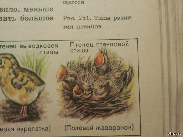 это был самый птенцовый птенец из птенцов птенцовых птиц немного тавтологии