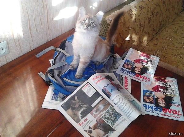 Пацан пришел к успеху Мой кот Шелдон позирует около журнала, в котором напечатали его фото