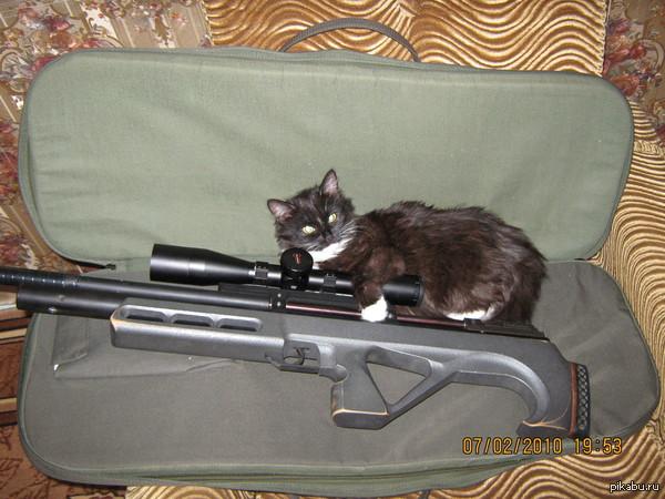 Мы за милитари, но с котиками