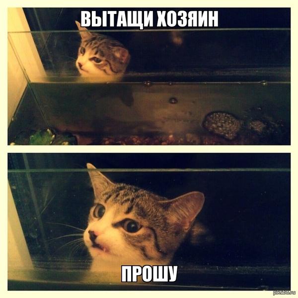 Кошка застряла между окном и аквариумом