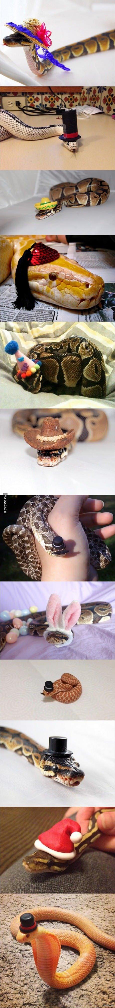 Змеи в шляпах просто змеи в шляпах (c)9gag