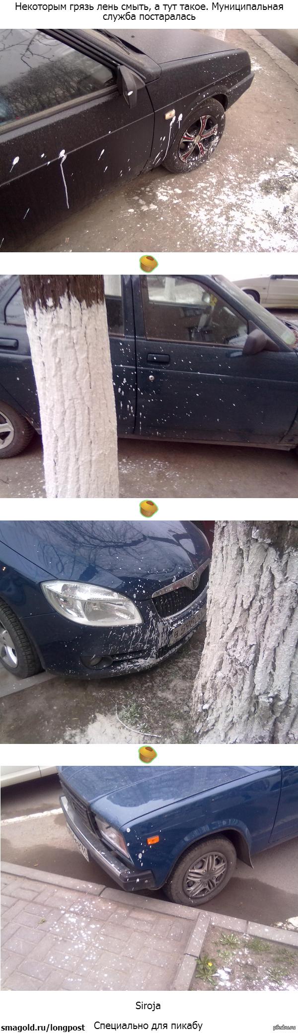 Подготовка к весне в  Ростове-на-Дону Побелили деревья от паразитов, а заодно и машины. В поддержку тега моё
