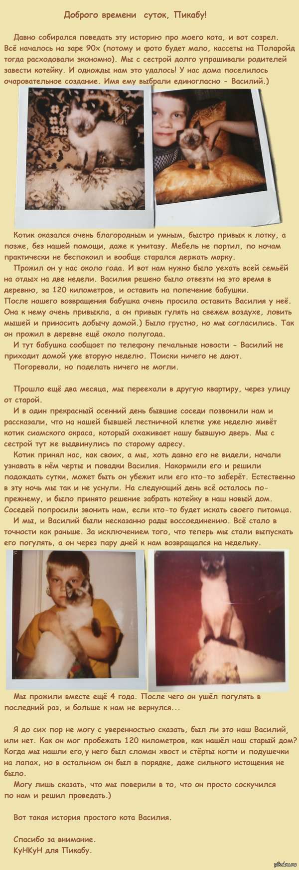 История кота Василия