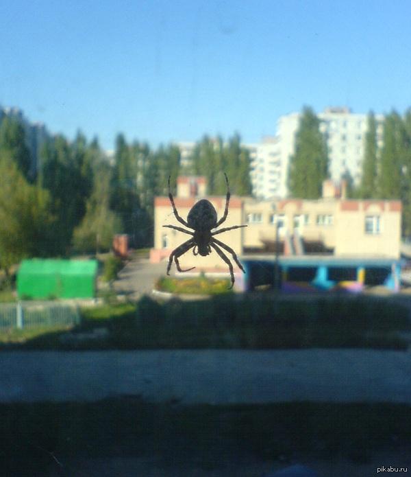 Вот такая прелесть поселилась как-то за моим окном Помогите классифицировать