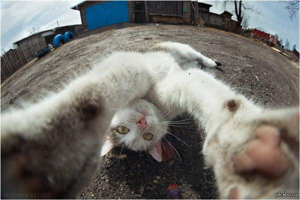 Селфи. Уровень кот