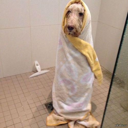 Собака-последушавытерака