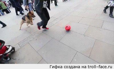 Двукратный чемпион по футбол-фристайлу троллит собакена Собакену, вроде, в радость...