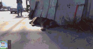 Еще один пес, которому дали шанс выжить