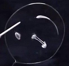 """Поверхностное натяжение при микрогравитации Все действо происходит в тоненьком слое воды, который """"растянут"""" внутри обруча."""