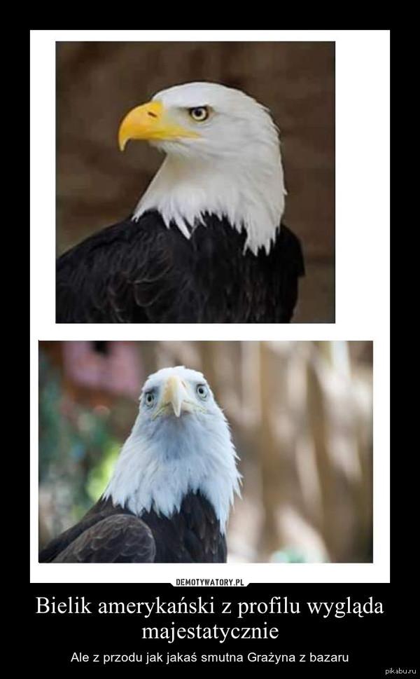 Демотиваторы про орел