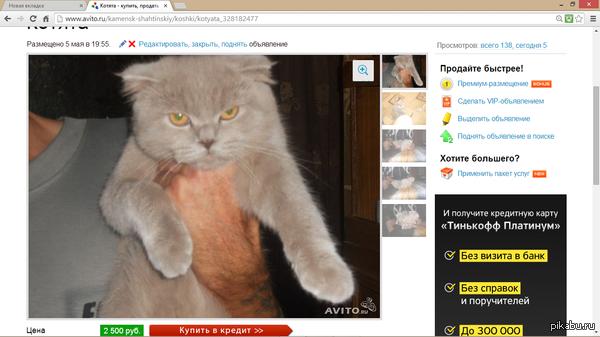 """И снова """"Авито"""") Кошак явно даёт понять, кто будет в доме хозяин)) Подыскивал маме котёнка (хочу подарок сделать, прошлый кот видимо пал в весенних баталлиях за право преобладания женским полом)"""