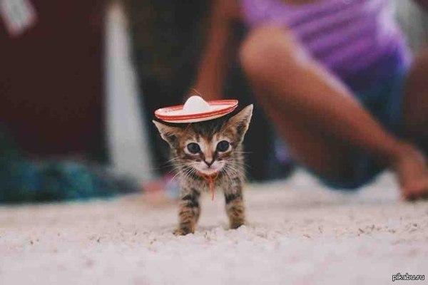 Котенок в сомбреро