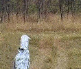 тяжело быть зеброй