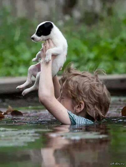 Картинки по запросу ребенок спасает животное