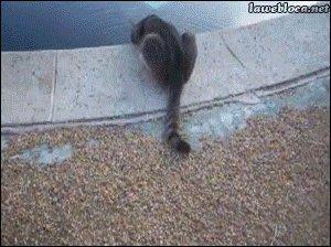 Пугливый кот