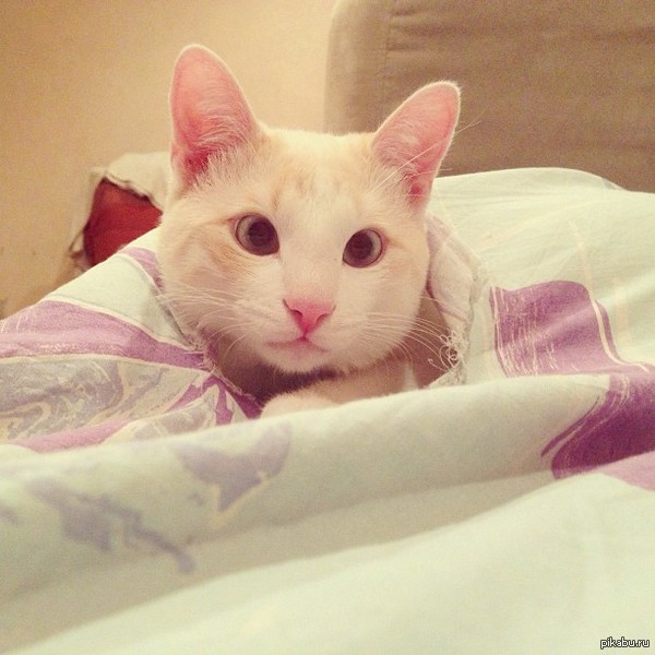 Кот косит глаза