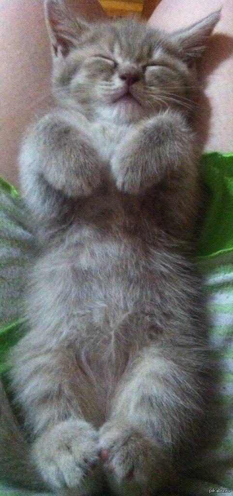 Наш малыш живёт у нас уже неделю, и похоже ему всё нравится^^ Он просто ангел когда спит, а когда не спит это торпеда))