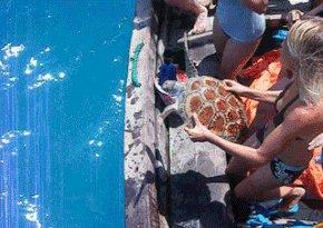 Заводная черепаха