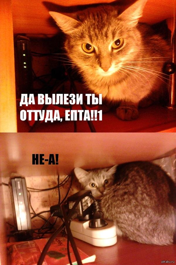 Моя кошка очень любит ворошиться в месте, где у меня находятся роутер и удлинитель!
