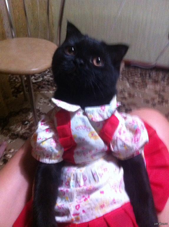 Приходила тетя кошка....))) Дочь глумится над кошатинкой чуток))))