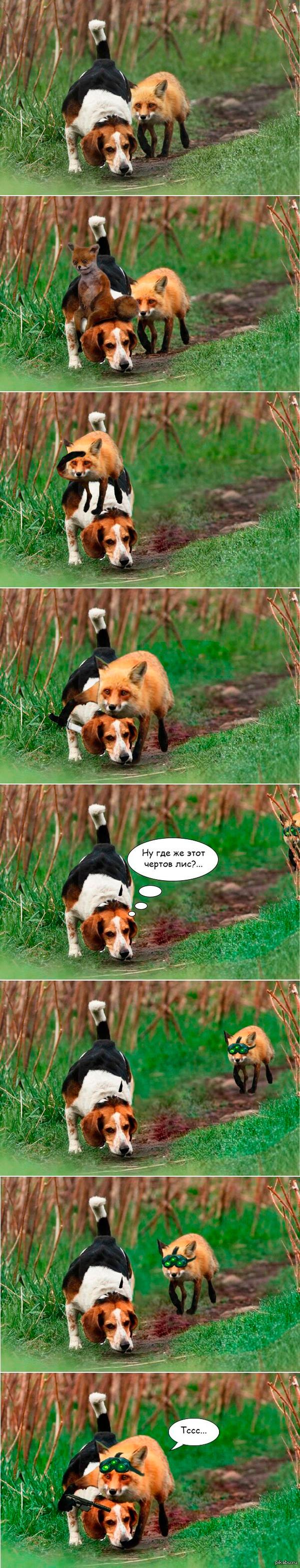 """Победитель в номинации """"Лучший охотничий пёс"""" Veni, vidi, photoshopped."""