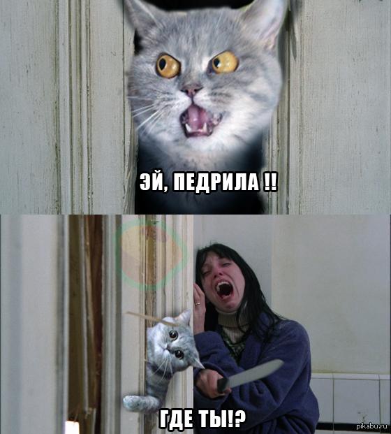идеальный коты с матом мемы мудрено, что