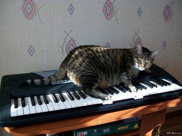 Мой полосатый пианист