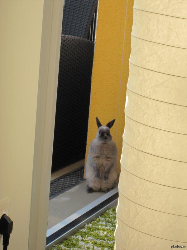 Внезапно... лежу на диване, поворачиваюсь и тут встречаюсь взглядом с сидящем кролем, так и глазели друг на друга пару минут=))