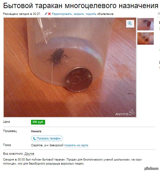 таракан многоцелевого назначения наткнулся когда искал себе зверюгу