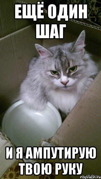 Кошка подруги намекает...