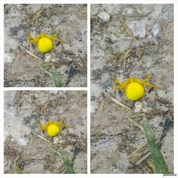 Что за чудо желтое? Сидел на цветочке.