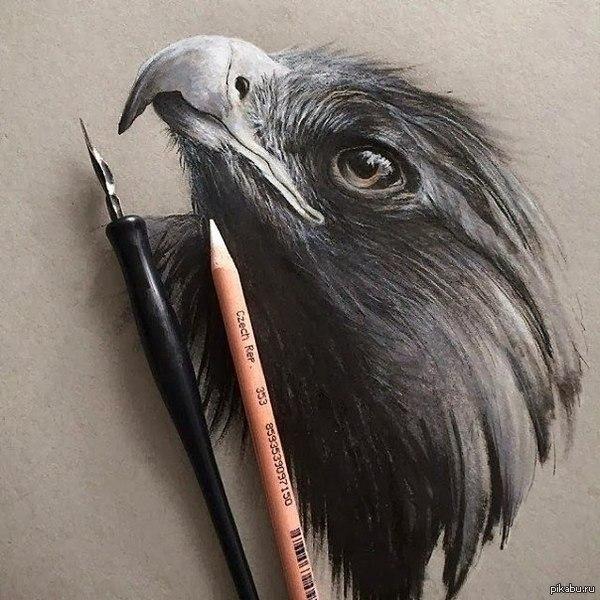 Белые  карандаш фото