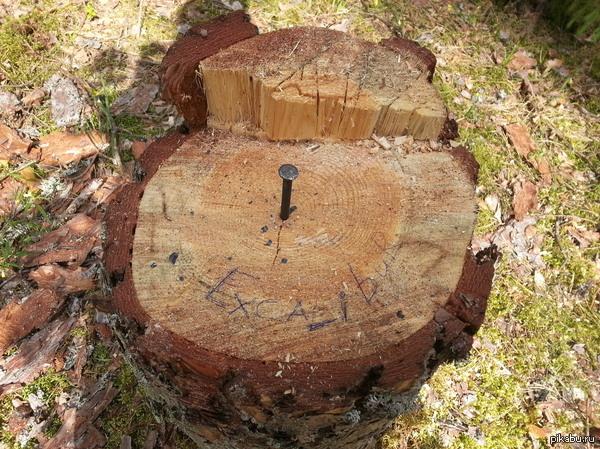 """Кому-то делать нечего было Гулял по лесу и увидел вот такую штуку. Интересно, найдется ли """"Артур""""?"""