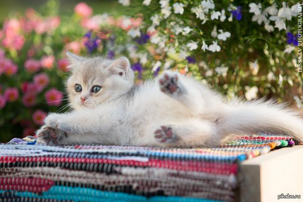 я просто положу здесь котика фотограф - чудесная женщина по имени Тесса, которая променяла юриспруденцию на котиков http://tessochka.livejournal.com